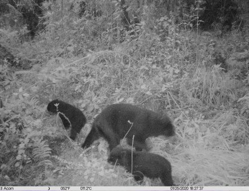 Monitoreo de la Fauna de la mancomunidad